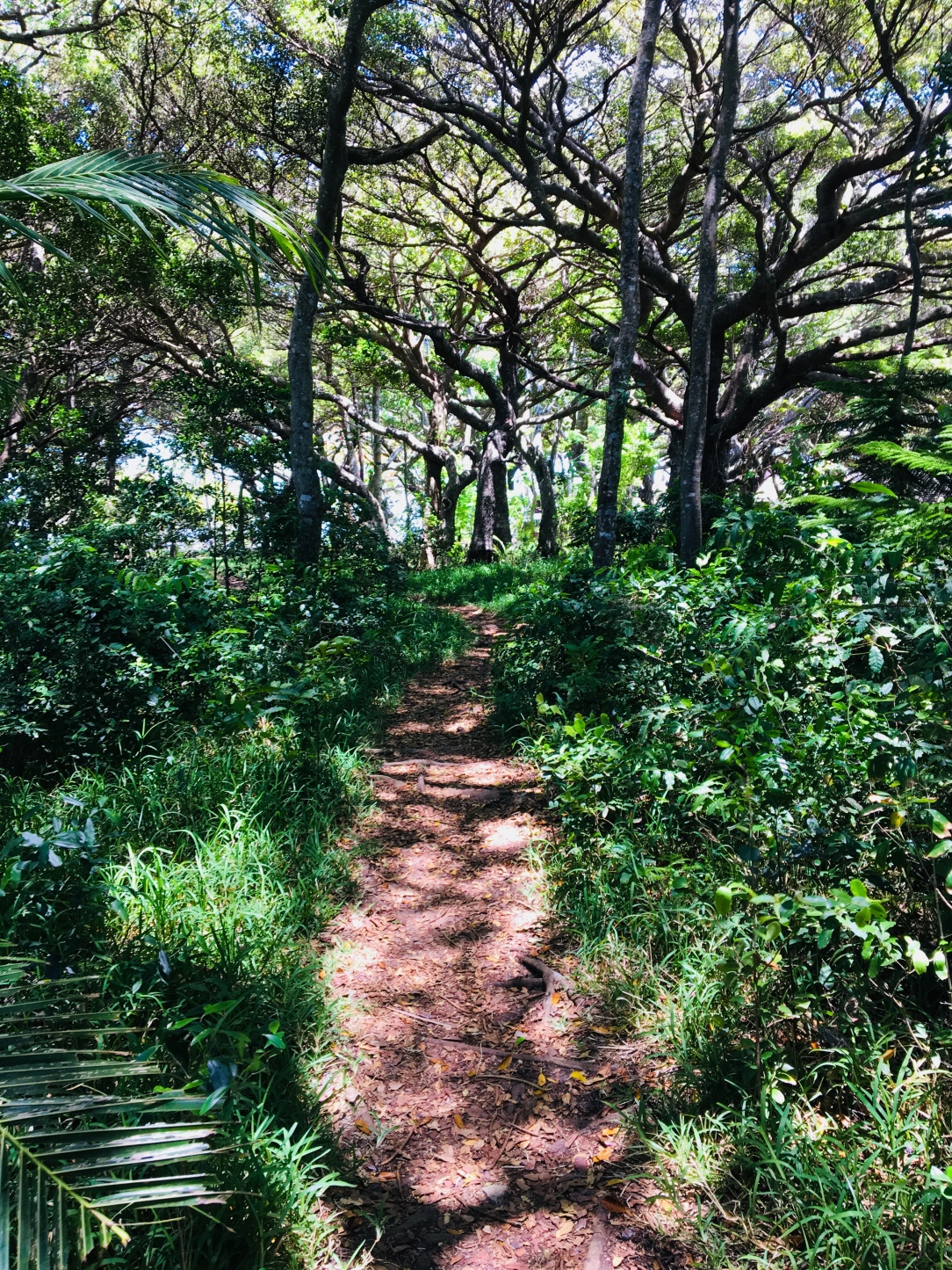 Isle of Pines 2