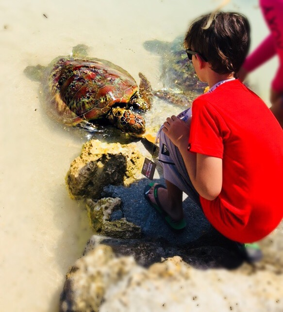Port Vila turtle feeding