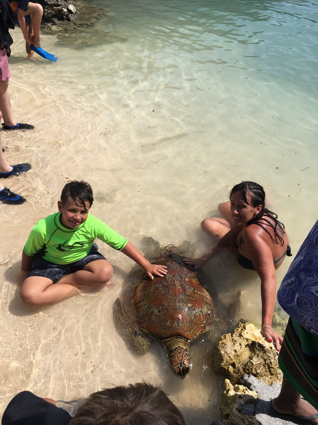 Port Vila turtle